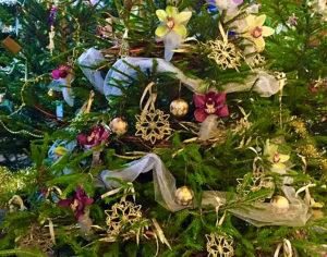 Glastonbury Christmas Tree Festival