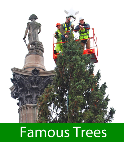 Famous Trees in History